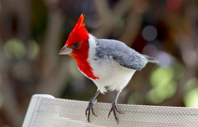 Cardinal_DSC_9248