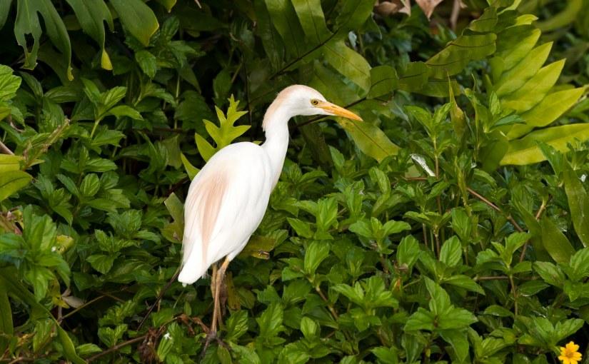 Wordless Wednesday: Birds ofKauai