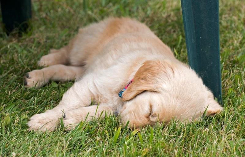 Finn_Sleeping_750_7311