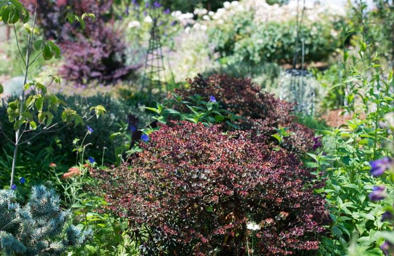 Garden_Perennial_DSC_0123