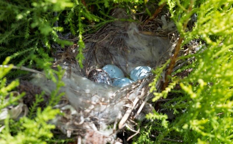 Nest_Eggs_DSC_0551