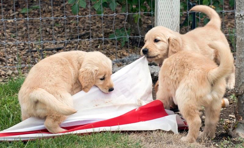 Puppies_750_7213