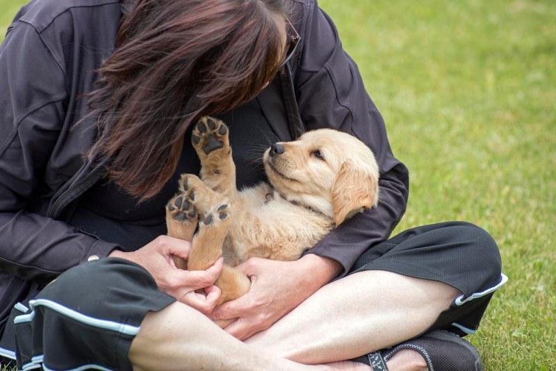 Puppy_Kathryn_750_7236