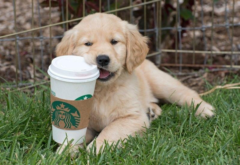 Puppy_Starbucks_7344