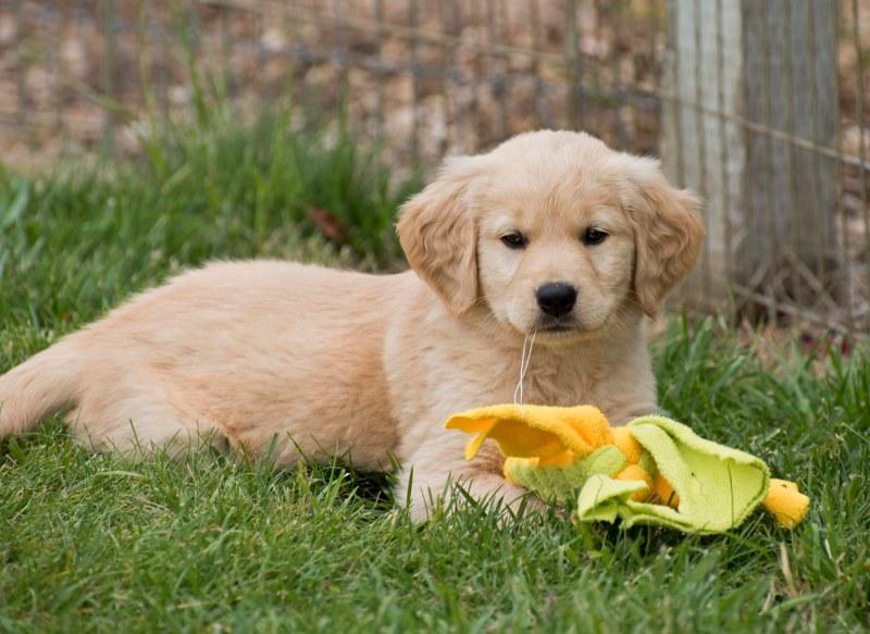 Puppy_Test_750_7197