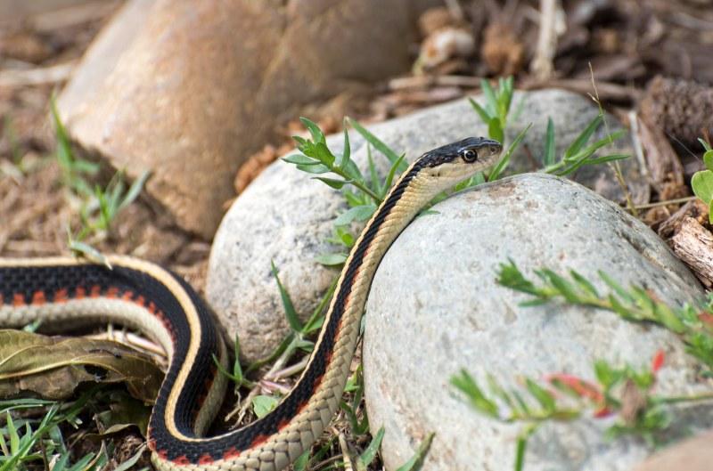 Snake_750_7436