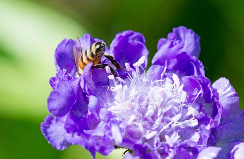 Bee_Macro_DSC_1822