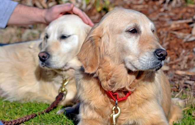 Breeder-Pups-10_2_13