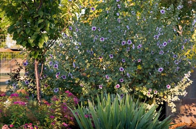 Garden_Front_DSC_0439