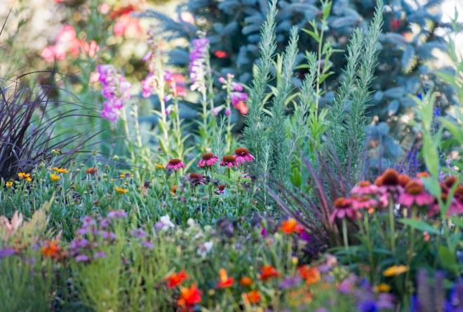 Garden_June_DSC_2276