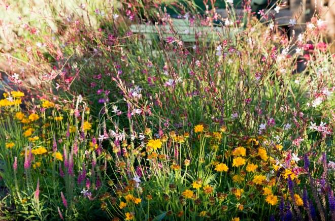 Garden_Sunset_DSC_0430