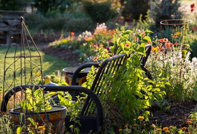 Garden_Sunset_DSC_0448