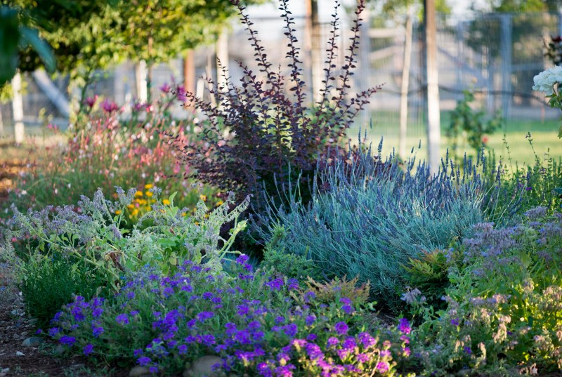 Hummingbird_Garden_DSC_0450