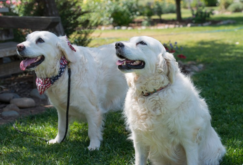 Image Result For I Rehabilitate Dogs