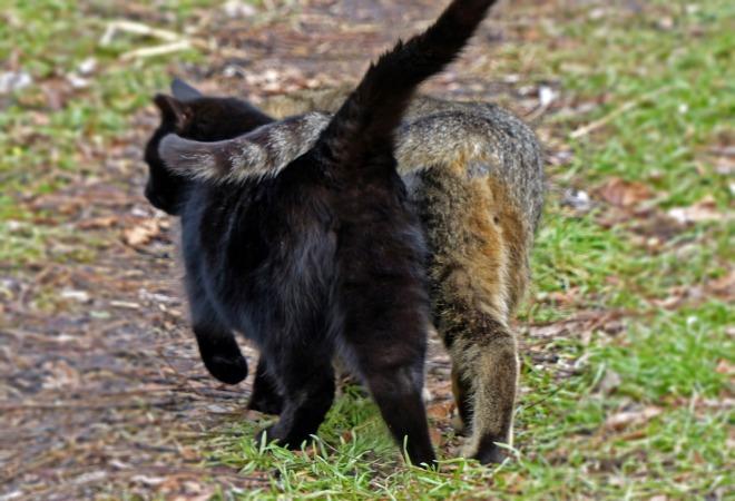 Cats_Debra