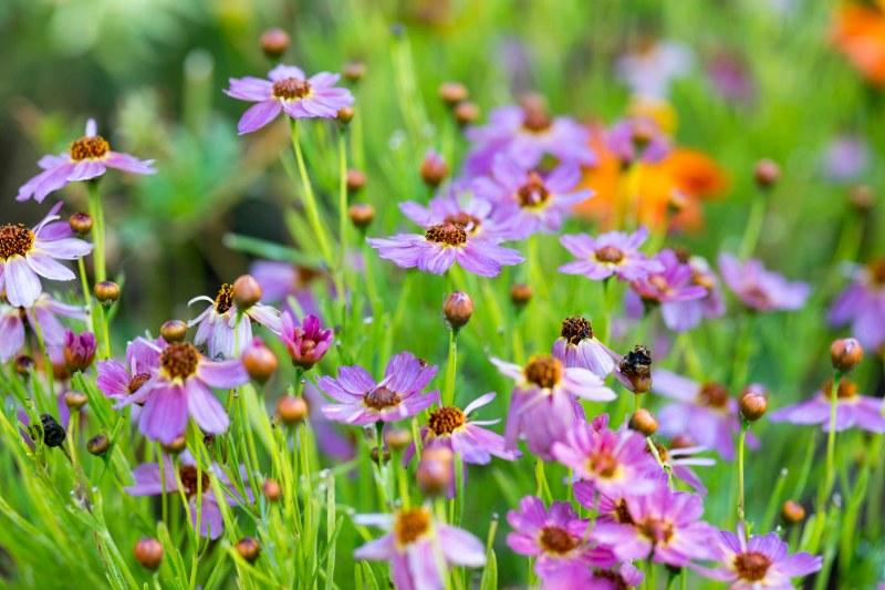 Garden_ZM_DSC_3920