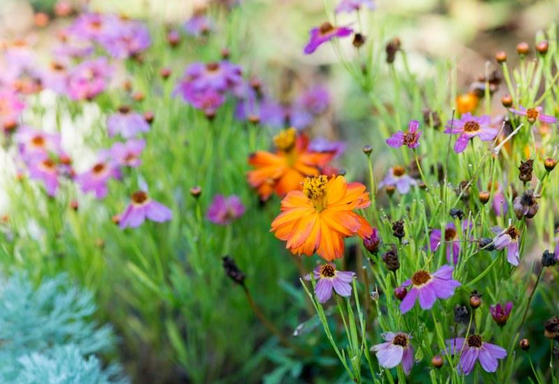 Garden_ZM_DSC_3923