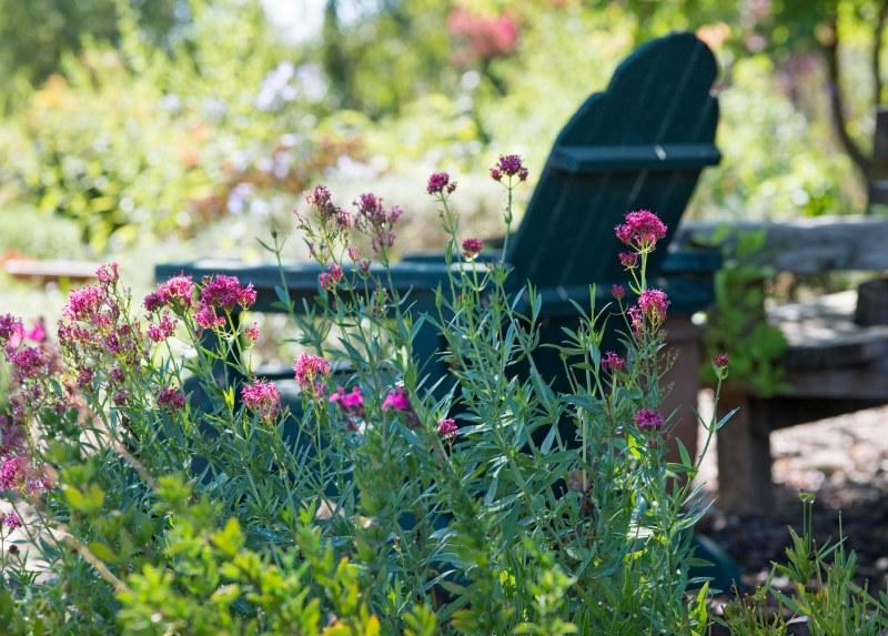 Garden_ZM_DSC_3952