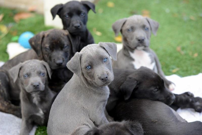 Lunas Pups_DSC_6955