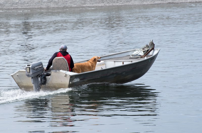 Boat-Dog_DSC_1518