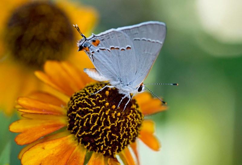 Butterfly_DSC_4213