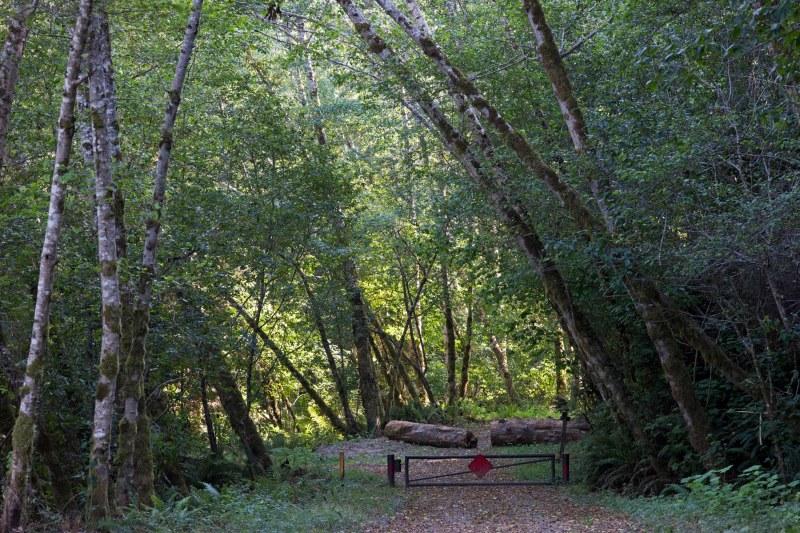 Klamath Woods_DSC_5070