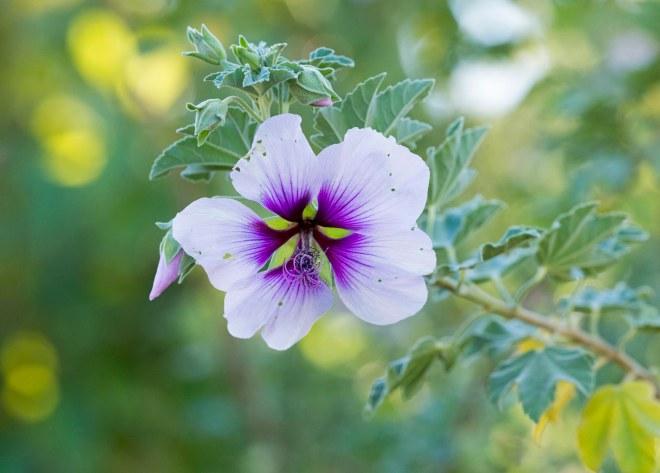 Flower_DSC_6237