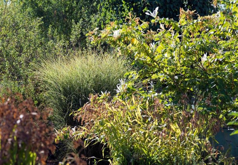 Garden_EarlySept_DSC_5336