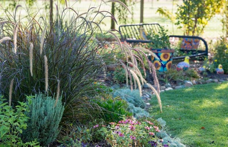 Garden_Indian Summer_DSC_6226