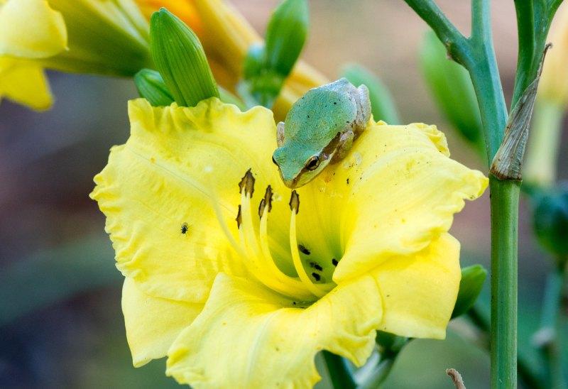 Frog_DSC_6948