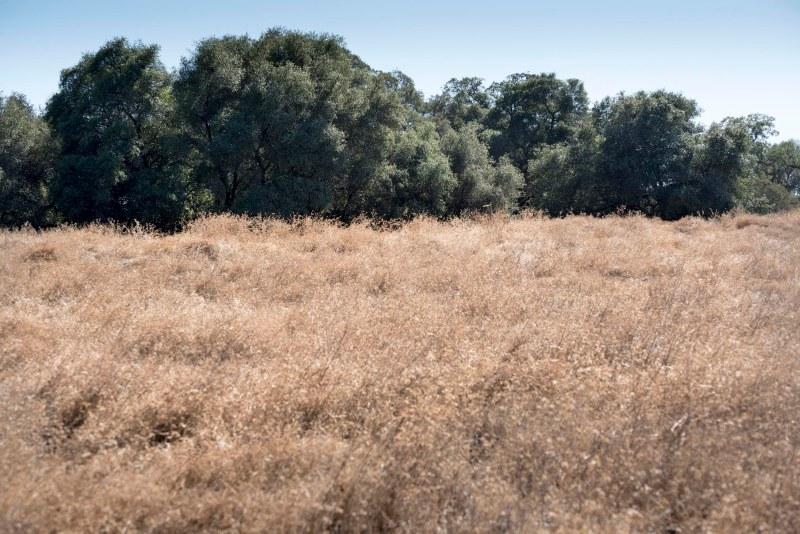 Meadow_DSC_2409