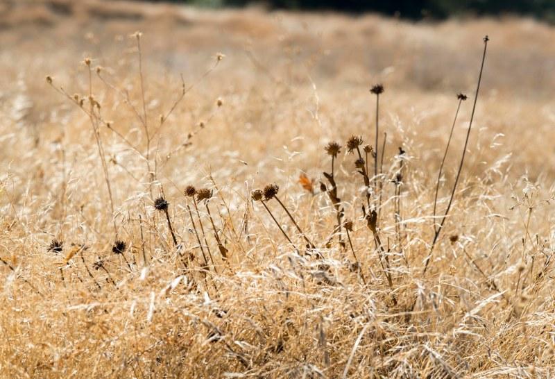 Meadow_DSC_7376