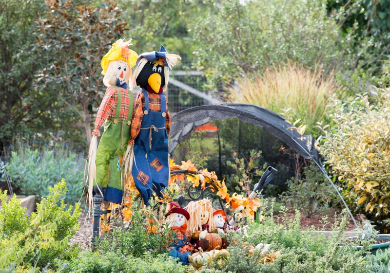 Scarecrows_DSC_7433
