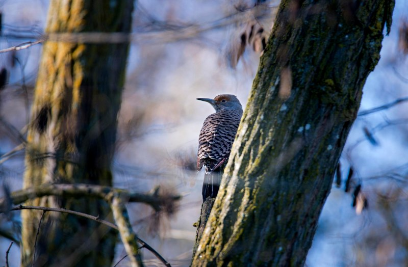 Bird_DSC_1379