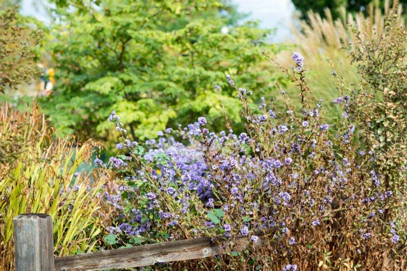 Garden_10_15_DSC_7759