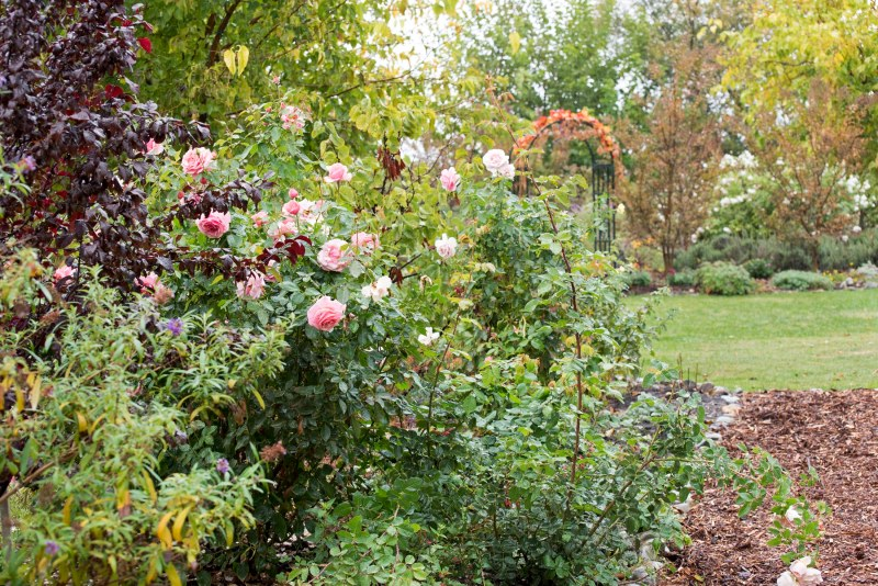 Garden_Rain_11_15_DSC_2647