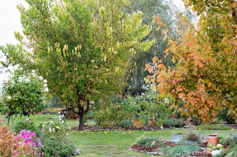 Garden_Rain_11_15_DSC_2656