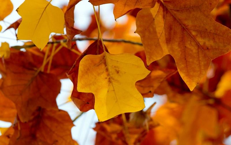 Leaf_Fall_DSC_8955