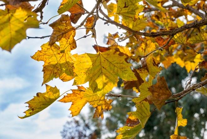 Leaves_50MM_DSC_8929