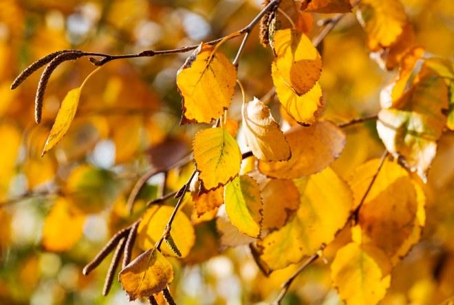 Leaves_Fall_DSC_8958
