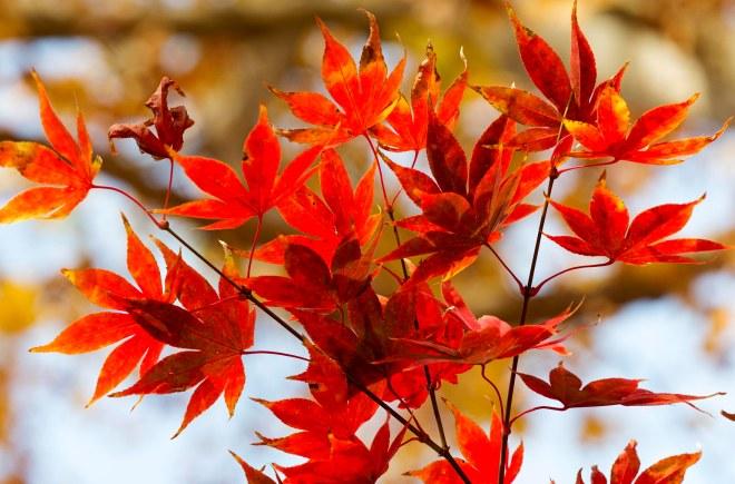 Leaves_Fall_DSC_8961