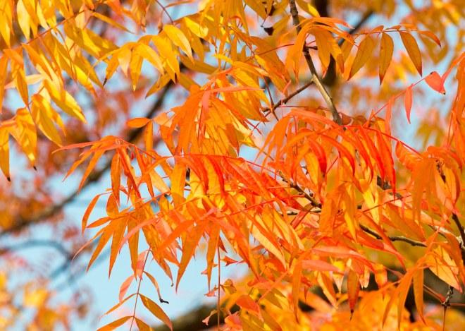 Leaves_Fall_DSC_8969