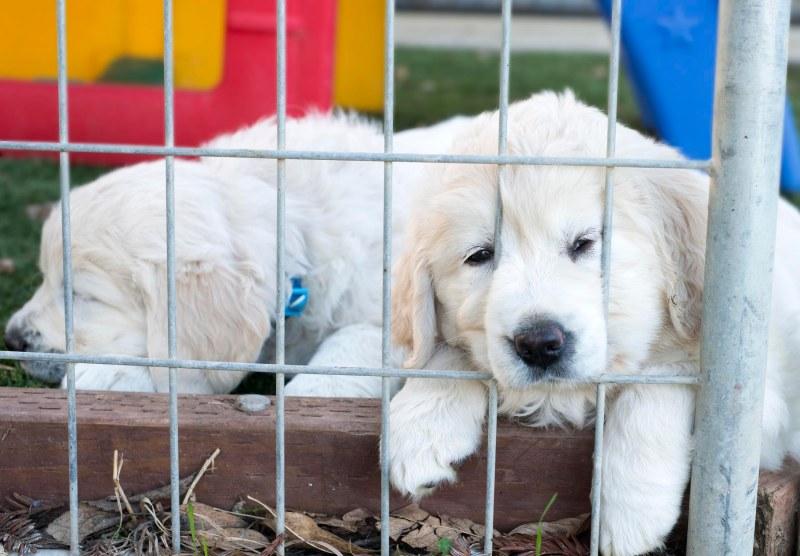 Puppies_DSC_8834