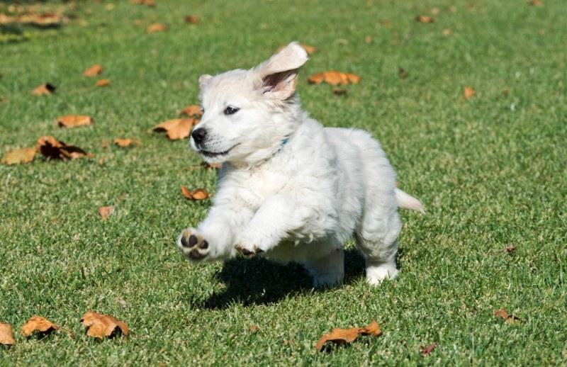Puppy test_DSC_9194