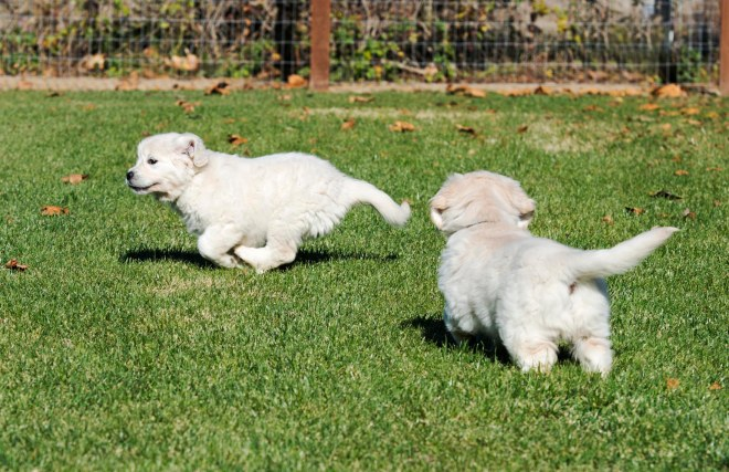 Puppy Test_DSC_9197