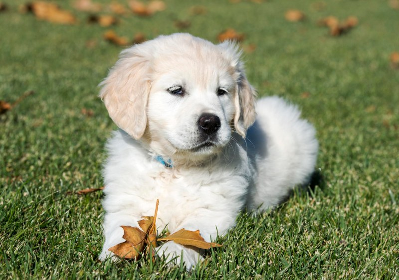 Puppy Test_DSC_9199