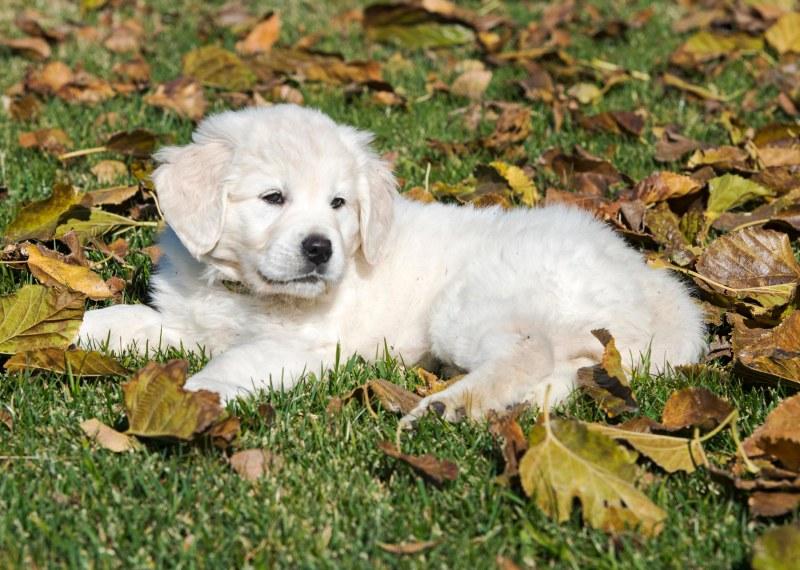 Puppy Test_DSC_9211