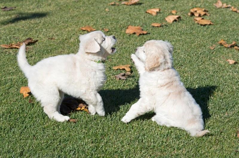 Puppy Test_DSC_9217
