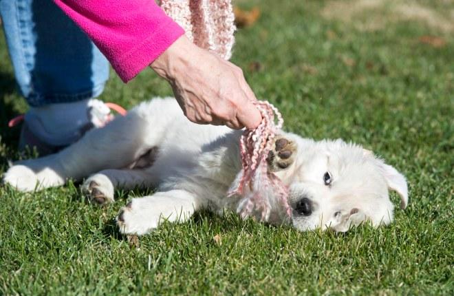 Puppy Test_DSC_9251