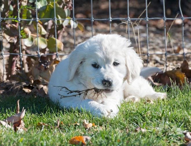 Puppy Test_DSC_9258